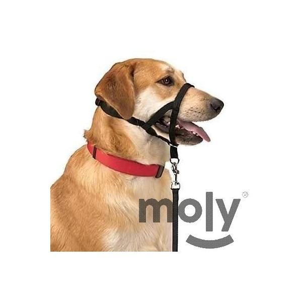 DOG CONTROL N.4 38 CM